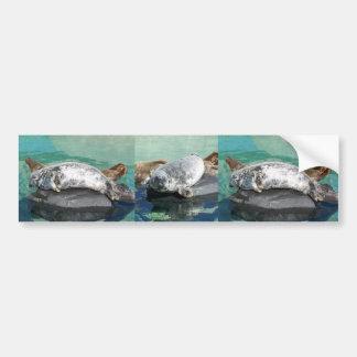 Grey Seal Pair On Rock Full Body Bumper Sticker