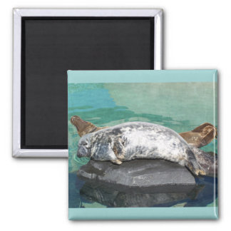 Grey Seal Pair On Rock Full Body Magnet
