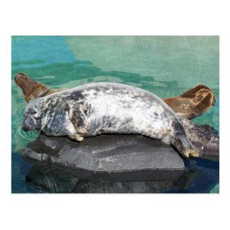 Grey Seal Pair On Rock Full Body Postcard