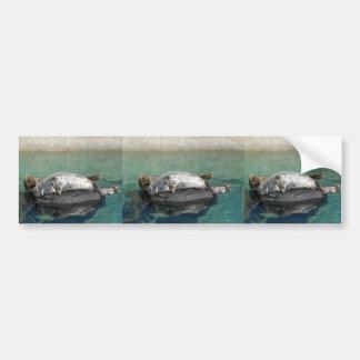 Grey Seal Pair On Rock Portrait Bumper Sticker