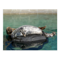 Grey Seal Pair On Rock Portrait Postcard