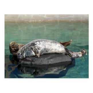 Grey Seal Pair On Rock Portrait Postcard