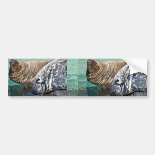 Grey Seal Pair Portrait Car Bumper Sticker
