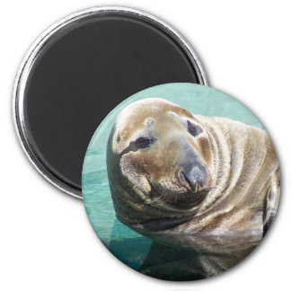 Grey Seal Portrait Magnet