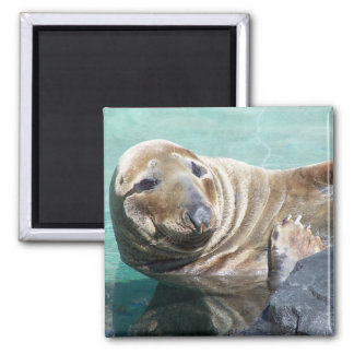 Grey Seal Portrait 2 Inch Square Magnet