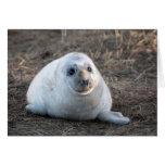 Grey Seal pup - Blank Greeting Card Greeting Cards