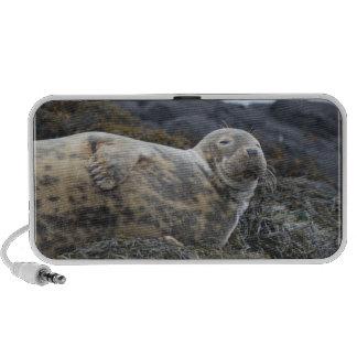 Grey Seal Mini Speaker