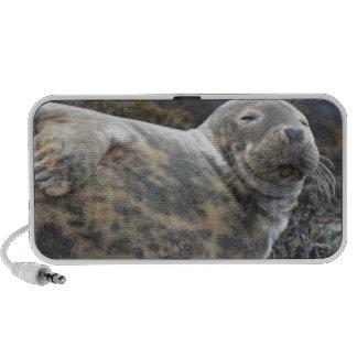 Grey Seal Travelling Speaker