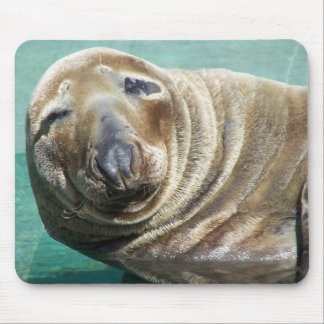 Grey Seal Straight On Portrait Mouse Pad