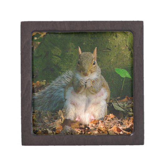 Grey Squirrel 01 Jewelry Box