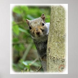 Grey Squirrel 9P52D-097 Poster