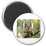 Grey Squirrel 9P52D-102 Fridge Magnets