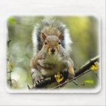 Grey Squirrel 9P52D-102 Mousepad
