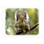 Grey Squirrel 9P52D-102 Postcard
