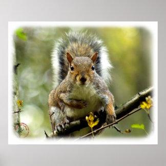 Grey Squirrel 9P52D-102 Poster