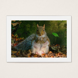Grey Squirrel (Bordered) Business Card
