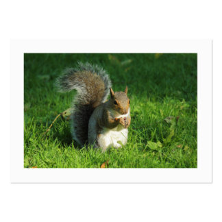 Grey Squirrel, Bute Park, Cardiff (Bordered) Large Business Card