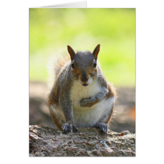 Grey Squirrel - Bute Park, Cardiff, Wales, UK Greeting Card