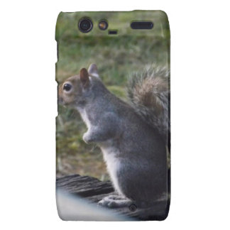 Grey Squirrel Motorola Droid RAZR Covers