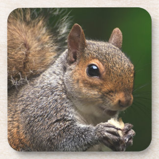 Grey Squirrel Cork Coaster