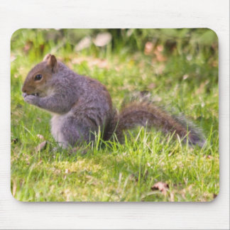 """""""Grey Squirrel Eating a Nut"""" Mousepads"""