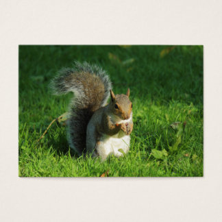 Grey Squirrel Eating Nuts, Bute Park, Cardiff Business Card