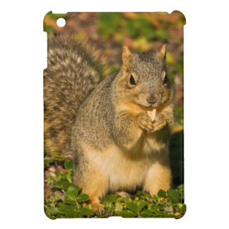 Grey Squirrel, eating, peanut, Crystal Springs 1 iPad Mini Cover