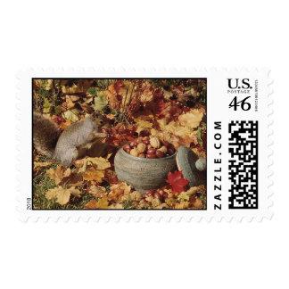 Grey Squirrel Feeding Postage