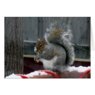Grey Squirrel in Winter Card
