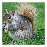 Grey Squirrel Invitations
