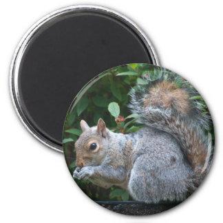 Grey Squirrel 2 Inch Round Magnet