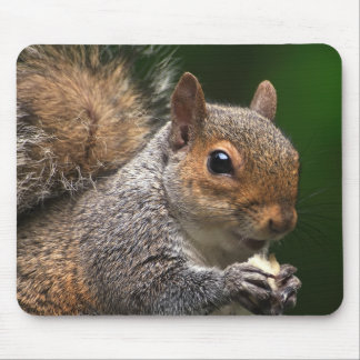 Grey Squirrel Mouse Pad