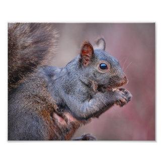 Grey Squirrel Art Photo