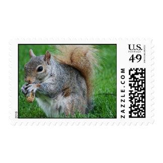Grey Squirrel Postage Stamp