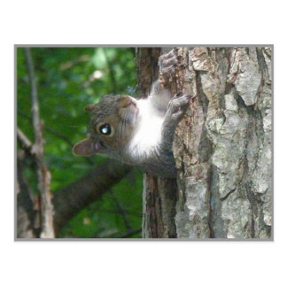 Grey Squirrel Scolding From Old Tree Postcard