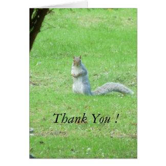 Grey Squirrel Thank You Card