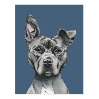 Grey Stalky Pit Bull Dog Drawing Postcard