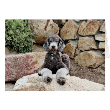 Beach Themed Grey Standard Poodle Dog enjoys Carmel Beach Card
