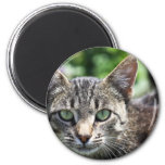 Grey Stripe Cat with Green Eyes 2 Inch Round Magnet