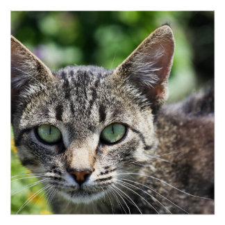 Grey Stripe Cat with Green Eyes Poster