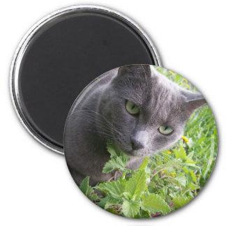 grey summer kitty cat kitten 2 inch round magnet