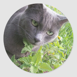 grey summer kitty cat kitten classic round sticker