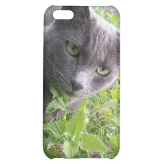 grey summer kitty cat kitten cover for iPhone 5C