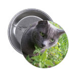 grey summer kitty cat kitten pinback button