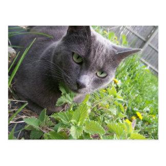 grey summer kitty cat kitten postcard