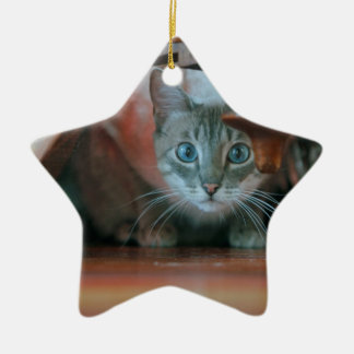 Grey tabby cat crouching under wooden table ceramic ornament