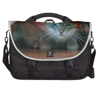 Grey tabby cat crouching under wooden table laptop commuter bag