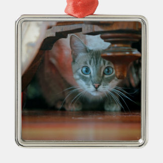 Grey tabby cat crouching under wooden table metal ornament