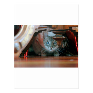 Grey tabby cat crouching under wooden table postcard