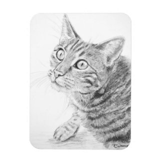 Grey Tabby Cat Drawing Rectangle Magnets